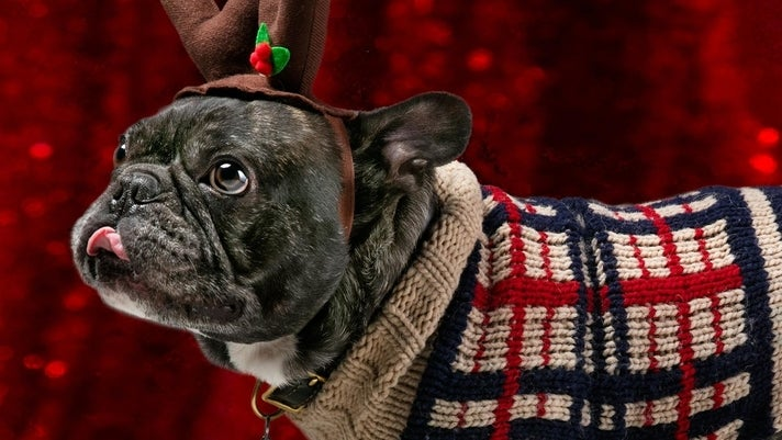 Pet Night with Santa at Glendale Galleria