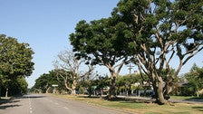 Coral trees on San Vicente Boulevard